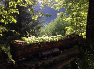 Foresta antistress