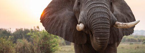 Coaching e elefanti